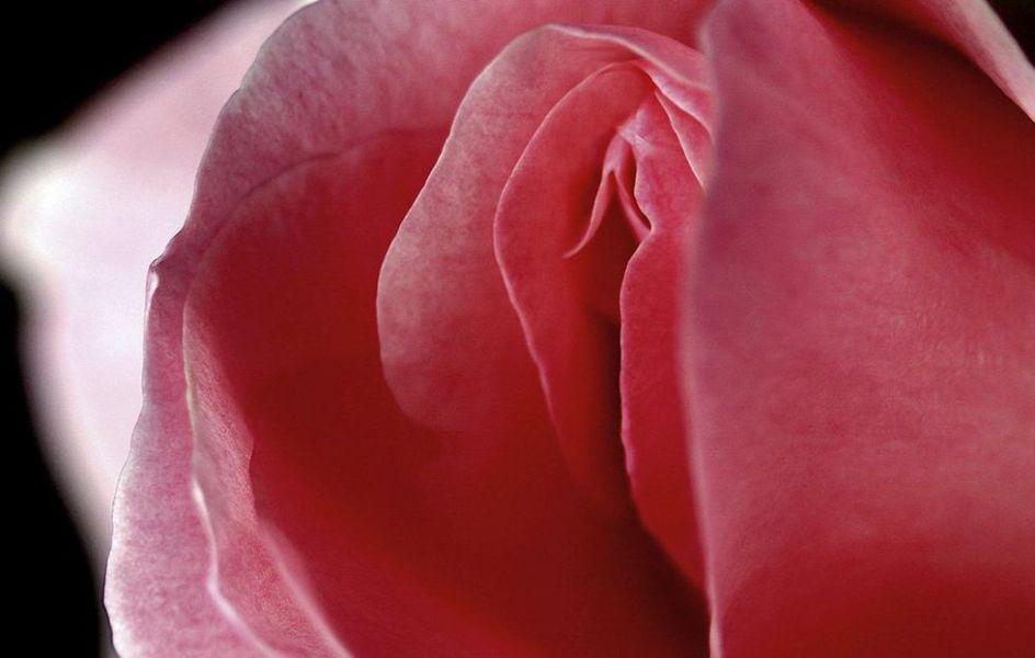 Làm hồng và se khít vùng kín hiệu quả từ các món ăn hằng ngày
